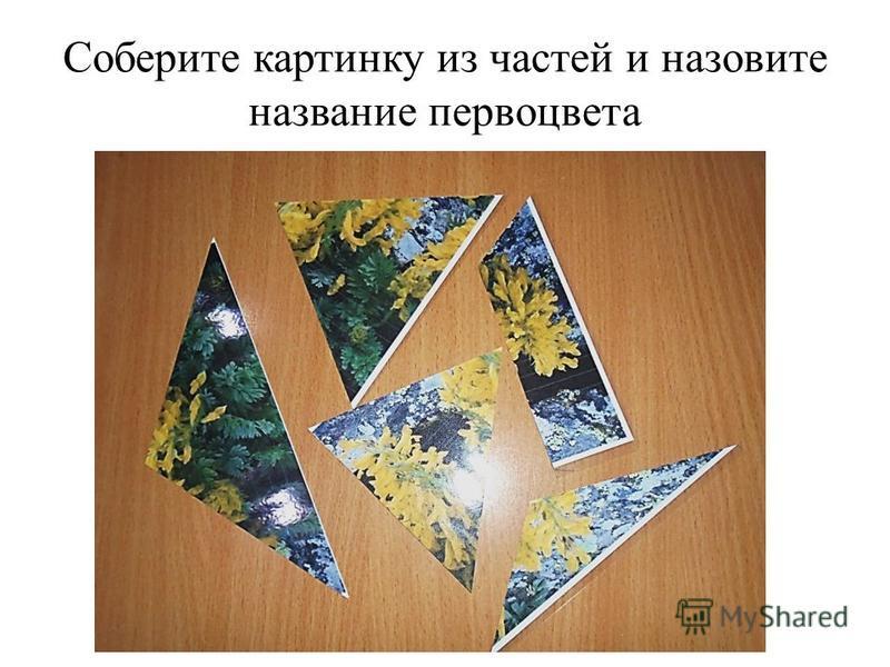 Соберите картинку из частей и назовите название первоцвета