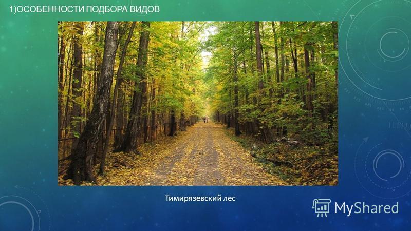 1)ОСОБЕННОСТИ ПОДБОРА ВИДОВ Тимирязевский лес