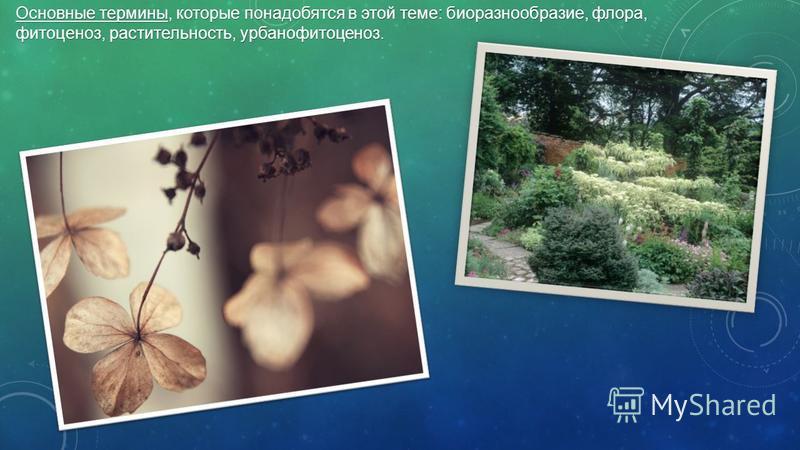 Основные термины, которые понадобятся в этой теме: биоразнообразие, флора, фитоценоз, растительность, урбанофитоценоз.