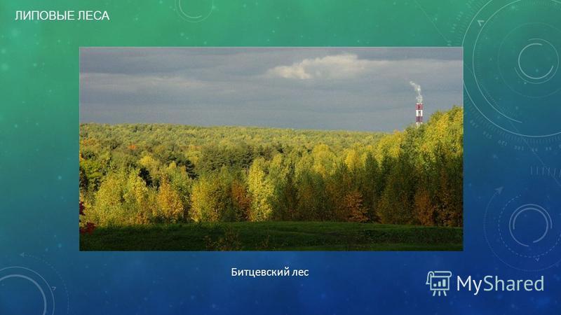 ЛИПОВЫЕ ЛЕСА Битцевский лес