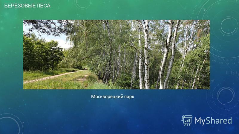 БЕРЁЗОВЫЕ ЛЕСА Москворецкий парк