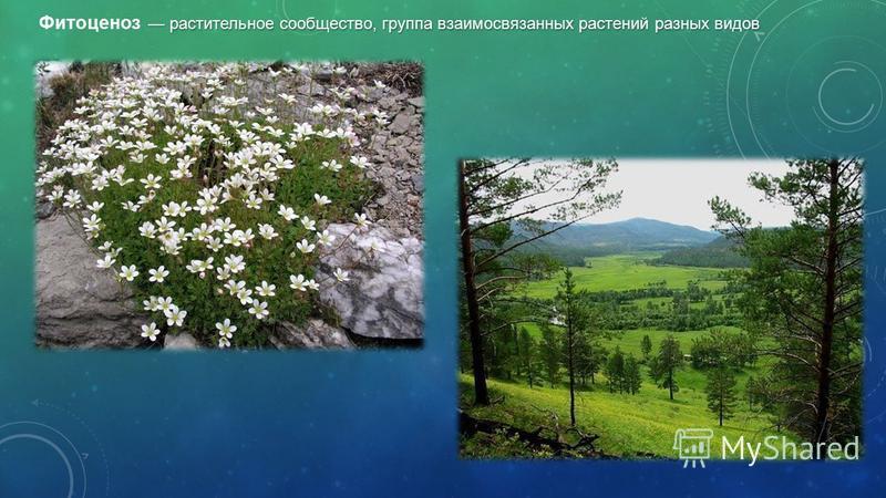 растительное сообщество, группа взаимосвязанных растений разных видов Фитоценоз растительное сообщество, группа взаимосвязанных растений разных видов