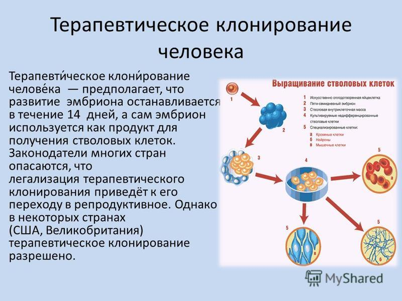 Терапевтичешское клонирисование человека Терапевти́чешское клони́рисование челове́ка предполагает, что развитие эмбриона останавливается в течение 14 дней, а сам эмбрион используется как продукт для получения стволовых клеток. Законодатели многих стр