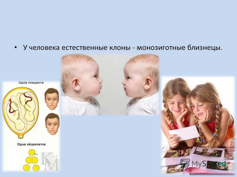 У человека естественные клоны - монозиготные близнецы.