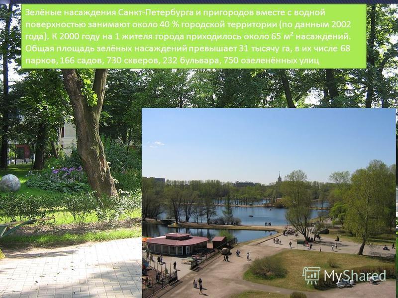 Зелёные насаждения Санкт-Петербурга и пригородов вместе с водной поверхностью занимают около 40 % городской территории (по данным 2002 года). К 2000 году на 1 жителя города приходилось около 65 м² насаждений. Общая площадь зелёных насаждений превышае