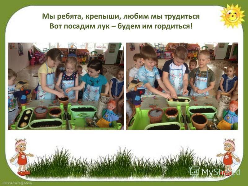 Мы ребята, крепыши, любим мы трудиться Вот посадим лук – будем им гордиться!
