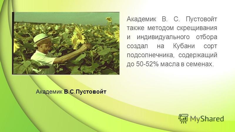 Академик В. С. Пустовойт также методом скрещивания и индивидуального отбора создал на Кубани сорт подсолнечника, содержащий до 50-52% масла в семенах. Академик В.С.Пустовойт