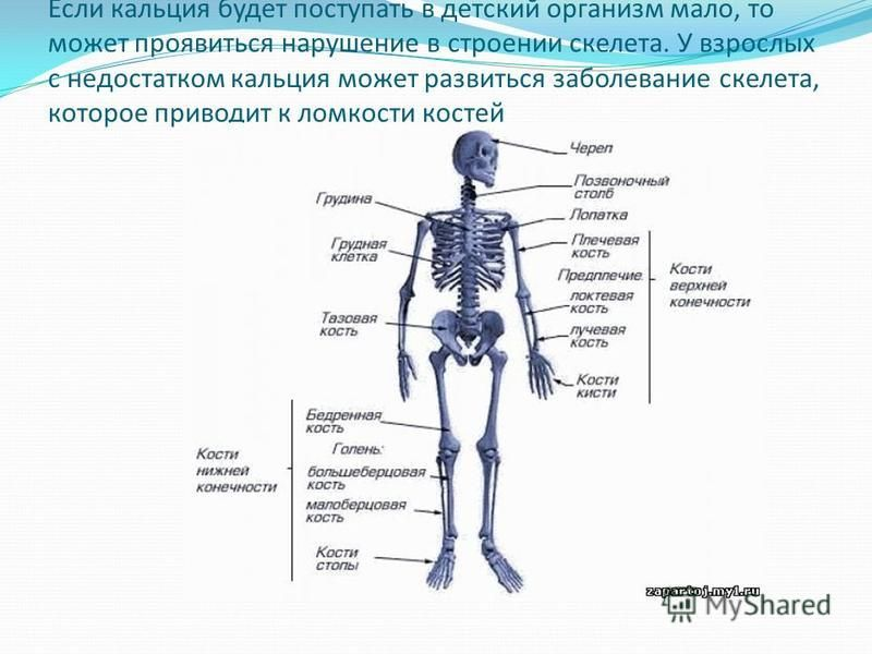 Если кальция будет поступать в детский организм мало, то может проявиться нарушение в строении скелета. У взрослых с недостатком кальция может развиться заболевание скелета, которое приводит к ломкости костей